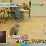 【猫が出迎える】研ナオコさんのクラシックな自宅螺旋階段【画像あり】