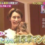 【猫のための家】ダレノガレ明美さんの自宅【画像あり】