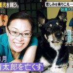 【保護犬を迎える】柴田理恵さんの自宅と愛犬【画像】
